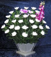 生花菊1.5